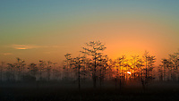 Sunrise and Mist at Big Cypress Swamp National Preserve in Florida. Image taken with a Nikon Df camera and 80-400 mm VRII lens (ISO 100, 80 mm, f/8, 1/500 sec).