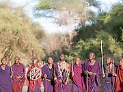 Group of Maasai tribesmen celebrating after Adumu, a traditional jumping contest. Near Amboseli National Park, Kenya