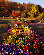 Flower beds at the Georgeson Botanical Garden, University of Alaska Fairbanks Experimental Farm, Fairbanks, Alaska.