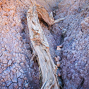 Colorful tilted layers of sandstone eroded by wind and water, Vermillion Cliffs Wilderness Area, Utah, USA