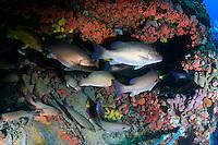 Fish school around the Aquarius habitat, an underwater ocean laboratory located in the Florida Keys National Marine Sanctuary.