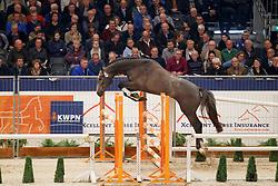 081, Kornet's Boy<br /> KWPN Stallionshow - 's Hertogenbosch 2018<br /> © Hippo Foto - Dirk Caremans<br /> 31/01/2018