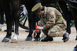 © Licensed to London News Pictures. 06/02/2019. London, UK. An army soldier paints the horse shoes with black paint Wellington Barracks before the Members of The King's Troop Royal Horse Artillery before they head to Green Park for a 41-gun salute to mark the 67th anniversary of the Queen Elizabeth II's accession to the throne. Photo credit: Dinendra Haria/LNP