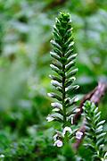 wild plant at the Alcantara river gorge, Sicily, Italy