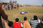 06 Feb 2016 - Kila Raipur - INDIA<br /> EXCLUSIVE<br /> A speeding Grey Hound Sends a 90 kg Man flying in Mid air during the Rural Sports Olympics at Kila Raipur in Punjab in India.<br /> ©Exclusivepix Media