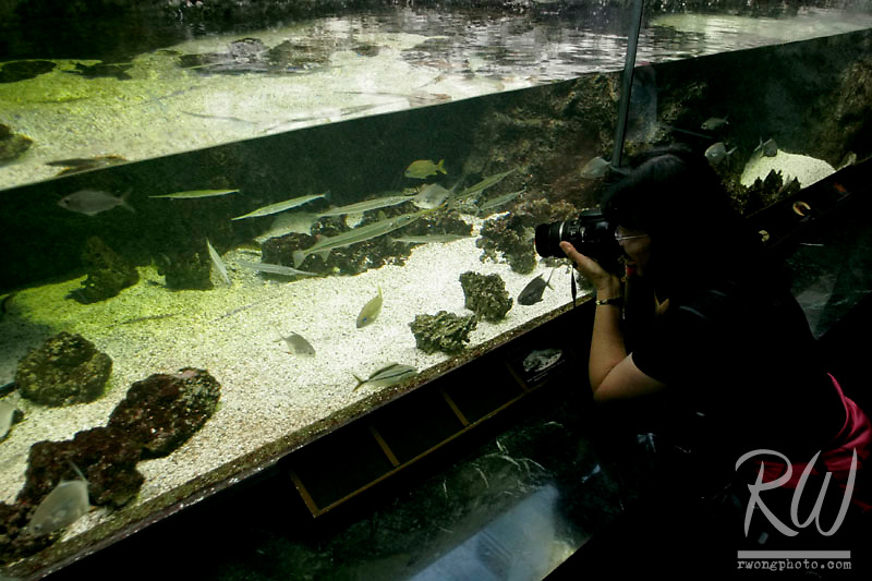 Photographer, John Shedd Aquarium, Chicago, Illinois