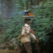A hawker carries a trey of Ram Ladoo on his head and a portable stand on his sholder in Lodi garden, New Delhi