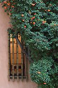 Adobe house with tree in Santa Fe
