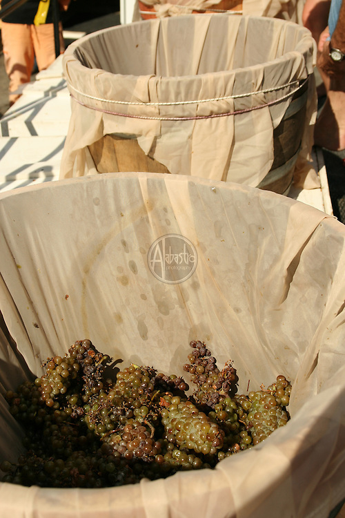 Grape Stomp 2009 at Brian Carter Cellars, Woodinville, WA