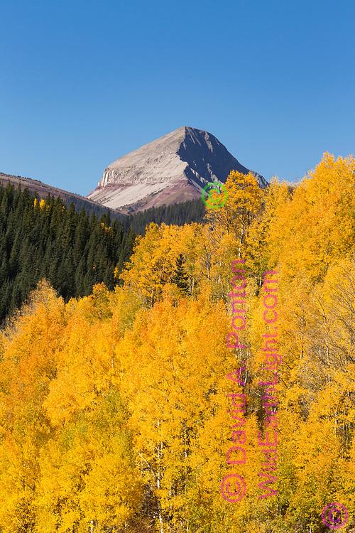 Mountain peak rises above autumn aspen stand in the San Juan Mountains, Colorado, © David A. Ponton
