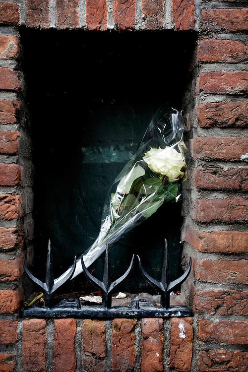 Witte roos achtergelaten in een erker.<br /> <br /> A white rose left behind  on the street.