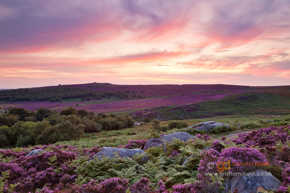An incredible sky mirroring the gorgeous summer colours of the Peak District's heather. Captured by the quarries at the south end of Burbage Rocks. A dramatic sunset ladnscape scene in Derbyshire, England, UK.