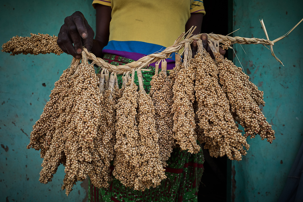 29/10/2019 / Kpatua / Ghana:<br /> Cecilia is holding millet seeds she's saving for the next farming season. This variety takes 3 months to mature whereas the regular one takes four and half months to mature.<br /> <br /> In the dry season, she farms vegetable on a patch of land near the solar powered water pump donated by Oxfam.