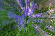 Zoom-burst effect on bluebells in woodland near Holloway, Derbyshire