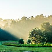 Early Morning Summer Fog