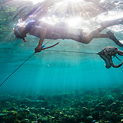 A spear fisherman in the Philippines swimming with his octopus catch.