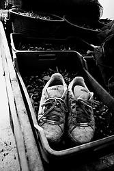 Acquaviva delle Fonti 30/10/2010, scarpe sporche di terra appoggiate su di una cassetta piena di olive...La raccolta delle olive e la produzione dell'olio extravergine sono un rituale che si protrae da moltissimo tempo in Puglia, questo avviene solitamente nel periodo che va da novembre a dicembre, mentre il lavoro di preparazione e coltivazione si svolge lungo tutto l'arco dell'anno..La raccolta è seguita nella maggior parte dei casi, quando le olive non vengono vendute all'ingrosso, dalla molitura presso gli oleifici per la produzione di quello che da queste parti viene chiamato anche oro verde..
