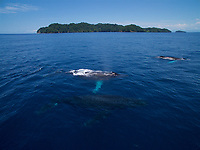 Humpback Whale (Megaptera novaeangliae)<br /><br />with Contreras Islands, Coiba National Park, Panama in background