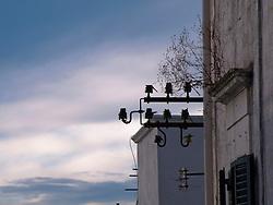 Vecchie campane di vetro per sostegno ai cavi elettrici ora in disuso
