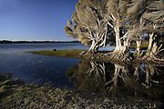 Melaleuca Reflection - Tasmania