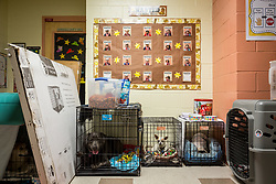 September 9, 2017 - Florida, U.S. - LOREN ELLIOTT   |   Times .Kingsway Elementary School in Port Charlotte, Fla., is seen converted to a hurricane shelter in anticipation of Hurricane Irma on Saturday, Sept. 9, 2017. The shelter had 151 pets checked in by Saturday afternoon. (Credit Image: © Loren Elliott/Tampa Bay Times via ZUMA Wire)