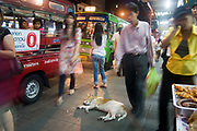 A dog goes to sleep in the middle of the pavement in this night street scenes in Silom district of Bangkok. People walk round him while catching buses. The bustling streets of this district are lined with street food stalls where dinner can be had for less than a dollar. These stalls are classic Bangkok. Busy, vibrant, the smells of cooking all around.