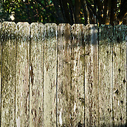Fence in my backyard.
