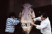Tyrannosaurus Rex gets its tongue glued into place at the Dinamation robot factory near Los Angeles, California). Dinamation International, a California-based company, makes a collection of robotic dinosaurs. The dinosaurs are sent out in traveling displays to museums around the world. The dinosaur's robotic metal skeleton is covered by rigid fiberglass plates, over which is laid a flexible skin of urethane foam. The plates and skin are sculpted and painted to make the dinosaurs appear as realistic as possible. The creature's joints are operated by compressed air and the movements controlled by computer.