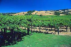 Sanoma Valley Vineyard