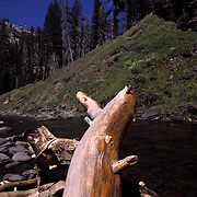 Driftwood at base of Rainbow Falls on the San Joaquin River, located in Reds Meadow, part of the Ansel Adams Wilderness, in Mammoth Lakes, CA.