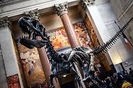 NEW YORK  2020V10<br /> <br /> Entren på Naturhistoriska museet i New York.<br /> <br /> Foto: Per Danielsson/Projekt.P