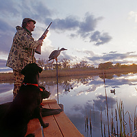 HUNTING, Red Lodge, Montana. Rob Hart duck hunting with his dogs on oxbow of Clark's Fork of the Yellowstone River.