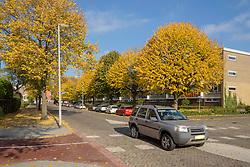 Land Rover, Rotterdam Prins Alexander, Herfst, Autumn, Netherlands