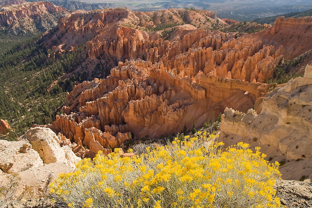 Bryce Amphitheather with colorful sandstone hoodoos at sunrise in Bryce Canyon National Park, Utah.