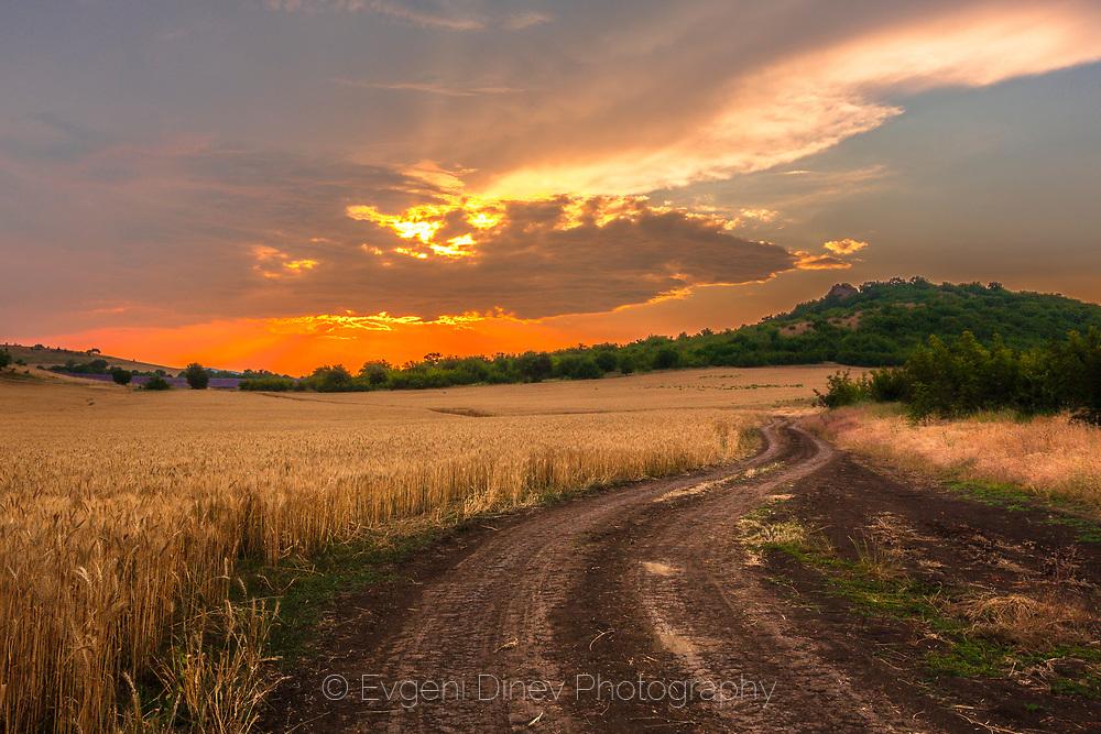 Road across a wheat fields