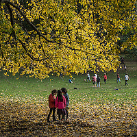 Three girls under a tree in Central Park, New York City.