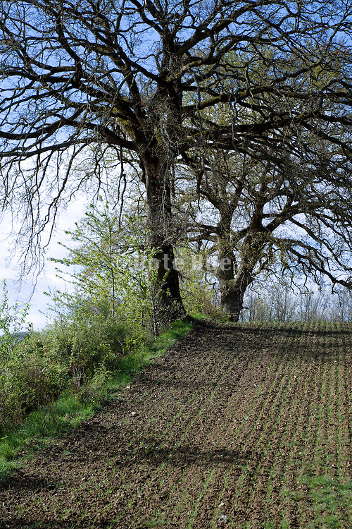 trees with agricultural land during early spring season