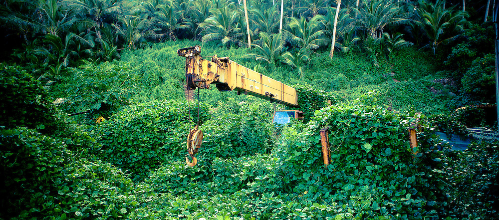 An Old Yellow Crane Enveloped by the Fiji Rain forest
