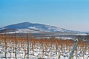 View from the Disznoko vineyard: the Tokaj mountain. On the other side is the village Tokaj. The Disznók? winery is owned by AXA Millesimes, a French insurance company. Disznoko means pig's head since a big rock in the vineyard supposedly looks like that. The new winery is impressive and a vast amount of money has been invested. Credit Per Karlsson BKWine.com