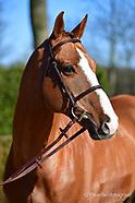 2018-02-stallions-eurohorse