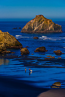 Face Rock and other sea stacks, Bandon Beach, Oregon USA.