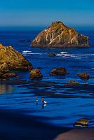 Face Rock and other sea stacks, Bandon Beach, Oregon USA.