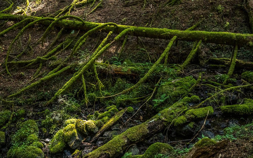 Forest Floor, Moran State Park, Orcas Island, Washington, USA.