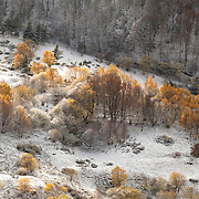 Mountain landscape with mixed trees and first snow