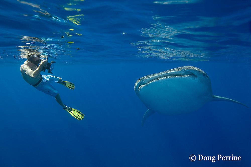 photographer James D. Watt and whale shark, Rhincodon typus, Kona Coast, Hawaii Island ( the Big Island ), Hawaiian Islands, USA ( Central Pacific Ocean ) MR 357
