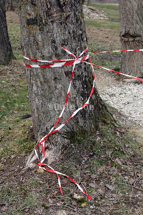 cordon off red and white safety tape wrapped around a tree