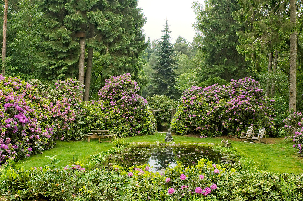 small pond surrounded by Rhododendrons in forest, Renderklippen, Epe, Gelderland, the Netherlands, may 2007