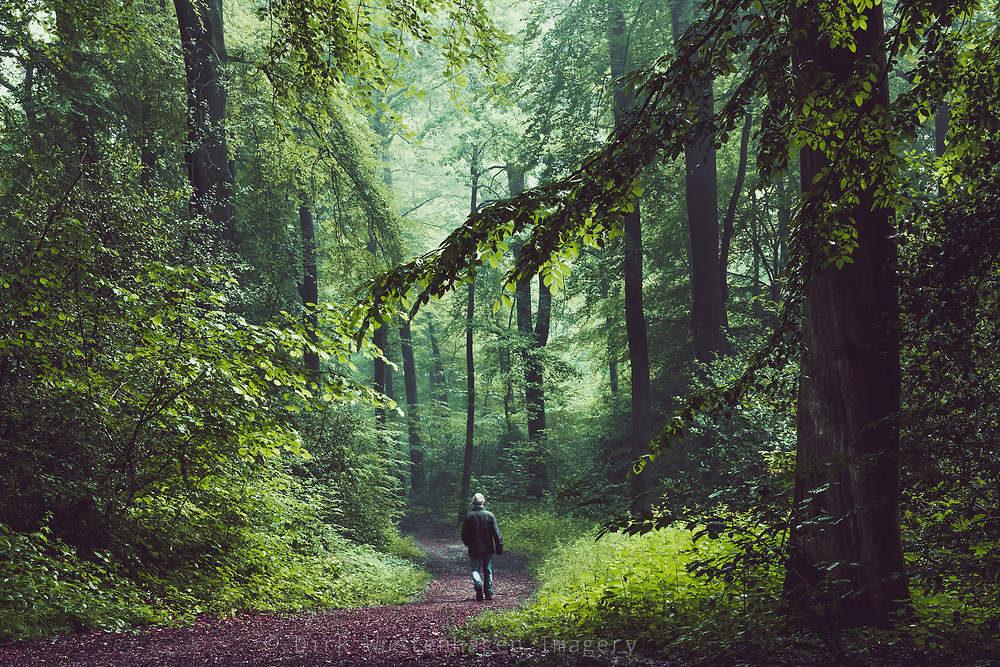 Man walking on a forest path