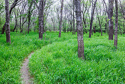 Path through woods, Texas Buckeye Trail, Trinity River, Dallas, Texas, USA.