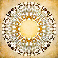 My own image of a row of cattails in a field of snow is the inspiration for this abstract creation of this mandala image. This is one of a series of mandalas using nature-sourced images.